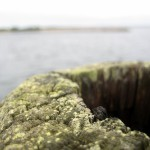 A macro shot of a pole out in a dock we visited. I actually had to reach out over the water from a very unsteady jetty.