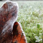 is it winter yet? Frost covering the ground.